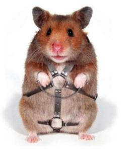 hamster manejando 2